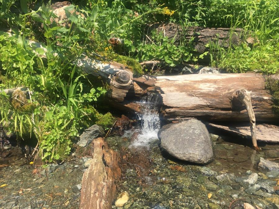 log waterfall IMG_2754